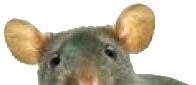 potkan Vasil